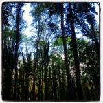 Tree canopy Donadea Forest Park